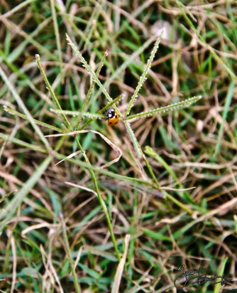 Ladybird (too bad I don't own a macro lens)